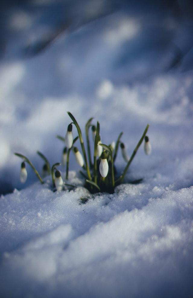 wiosna poangielsku